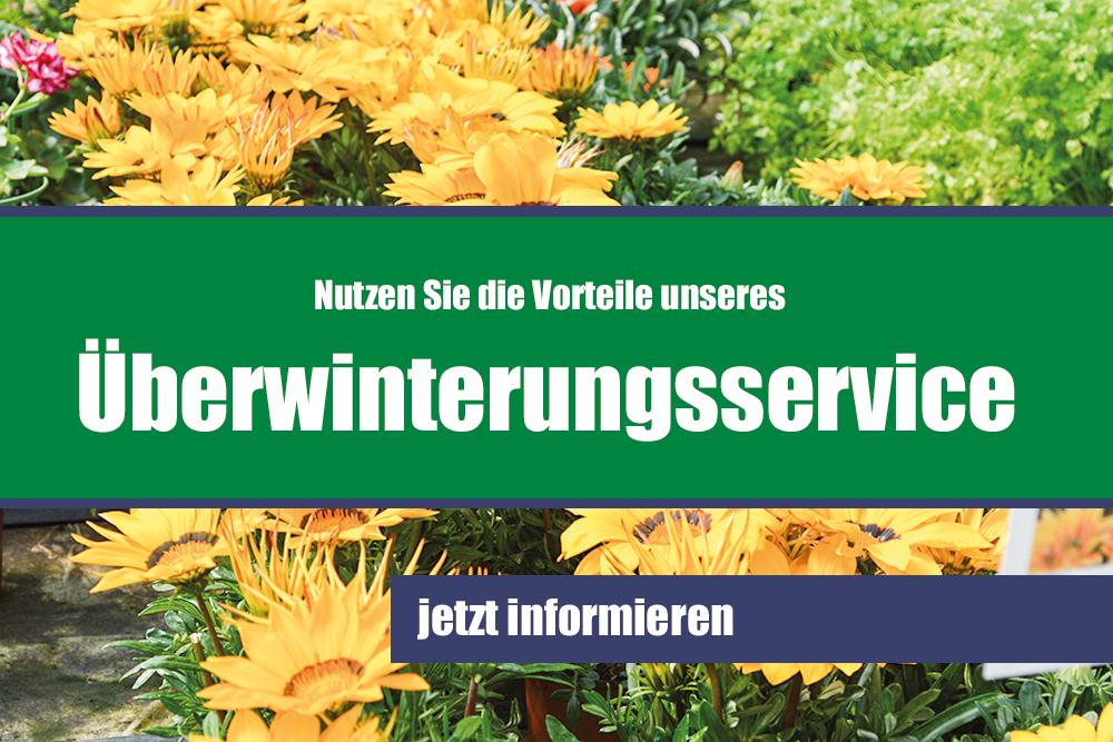 Blumenmeinhardt.de   überwinterungsservice Start