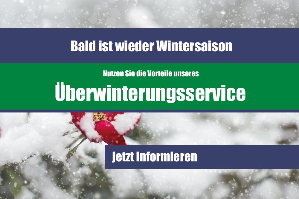 Blumenmeinhardt.de | überwinterrungsservice-banner Start